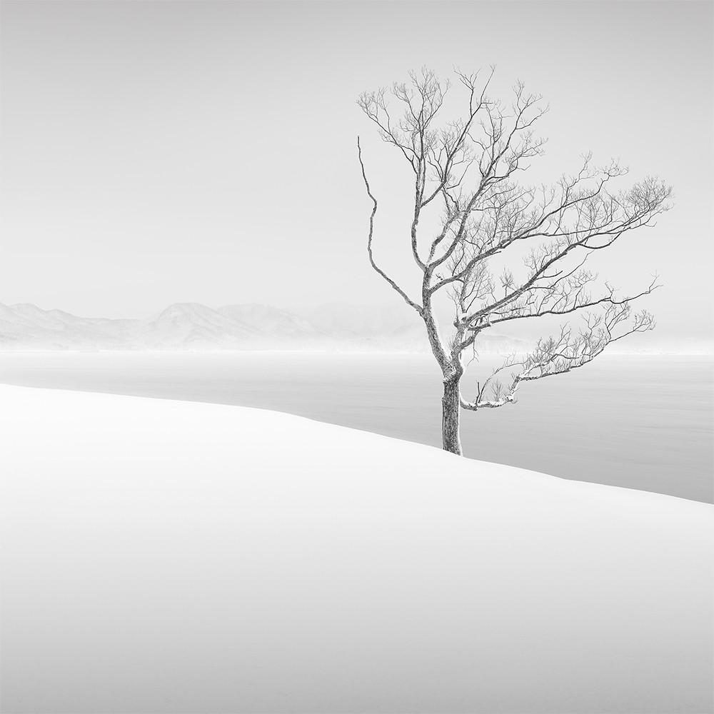 white tree 2015