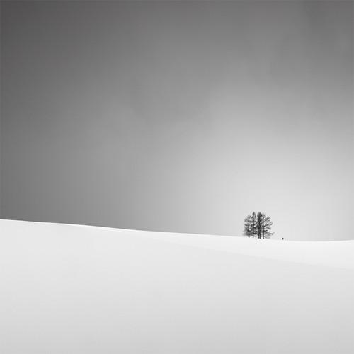 5 trees +1 teeny 2013