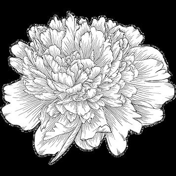 AK Blooms Logo 4.png