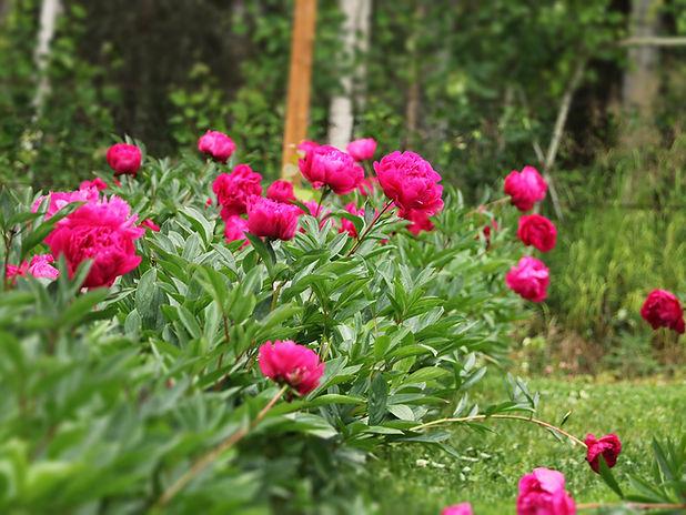 wholesale flowers.jpg