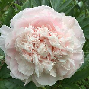 Alaska Blooms 015.jpg