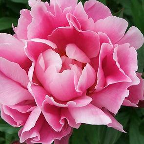 Alaska Blooms 029.jpg