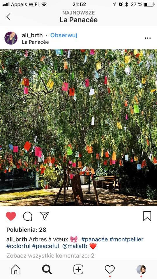 Wish Tree KW Kate Wyrembelska