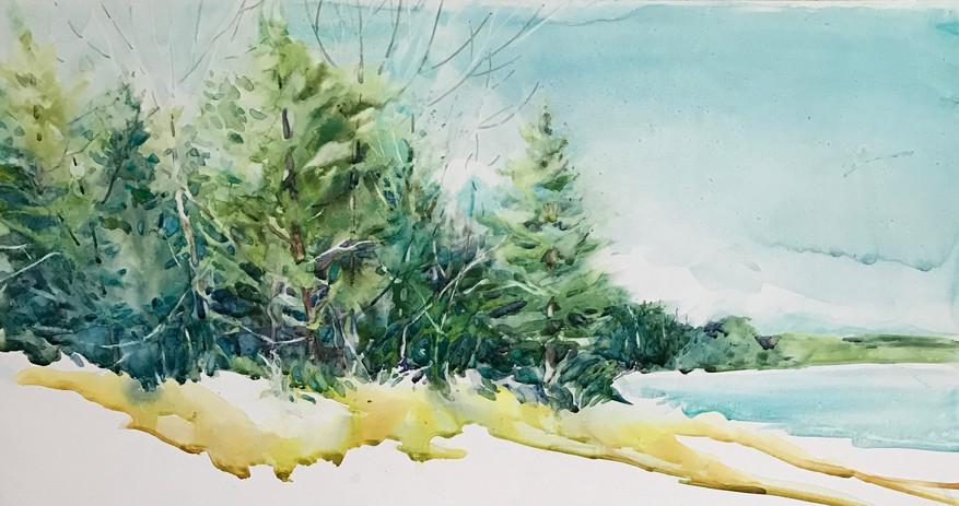 Michigan Pines