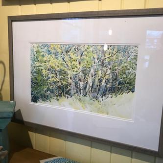 Eastport Birch Trees