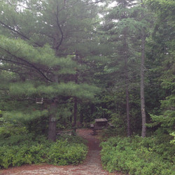 Lined with Pine Needes