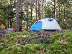 Tent Camping on a wooded, mossy site