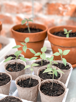 Growing Season: Time for getting out there and start planting those seeds!