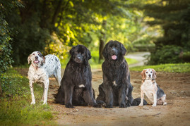 DOGS_NEW.jpg