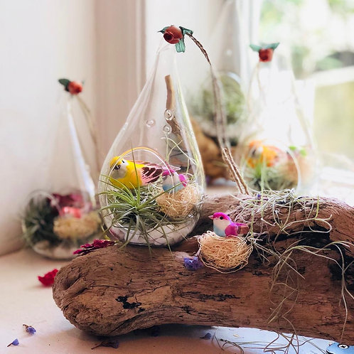 4 raindrop terrariums with birds, air plants, moss by a window with driftwood.