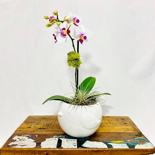 small bird vase with mini orchid and air plant