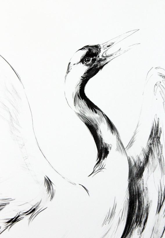 """""""Crane of Hokusai - Hide"""""""