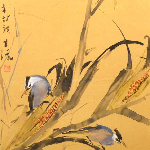 Corn and Birds