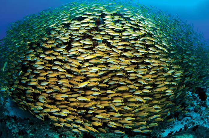 Seychelles - Madascarenes