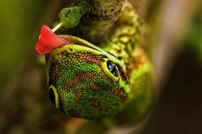 Nature & Vie Sauvage - Madascarenes
