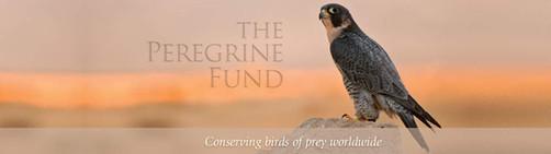 The Peregrine Fund - Madascarenes Partenaires