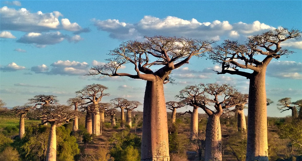 baobab3_edited.jpg