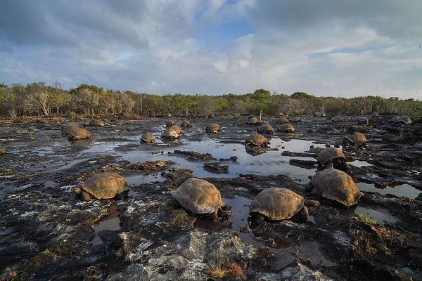 Tortues des Seychelles - Madascarenes
