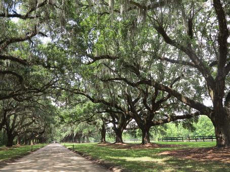 Adventure Done Right goes to Charleston, South Carolina!
