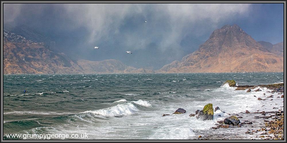 Elgol birds. Skye 24