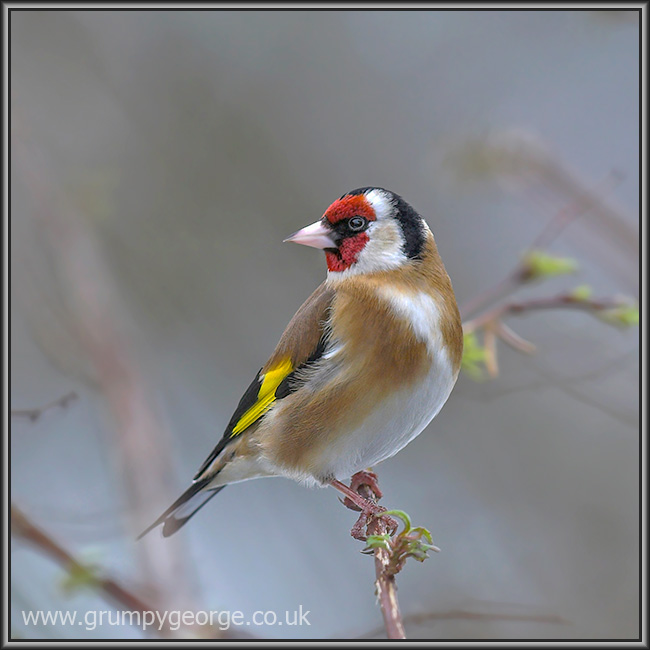 12.12.goldfinch.01