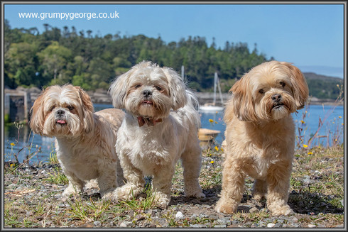 18.07.02.ted.betsie.molly.stirling.jpg