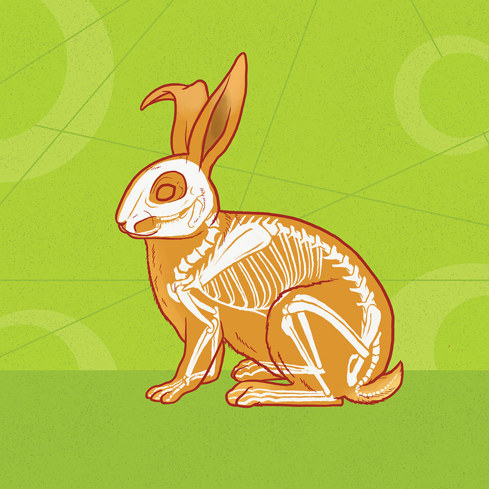 What's Inside   Rabbit