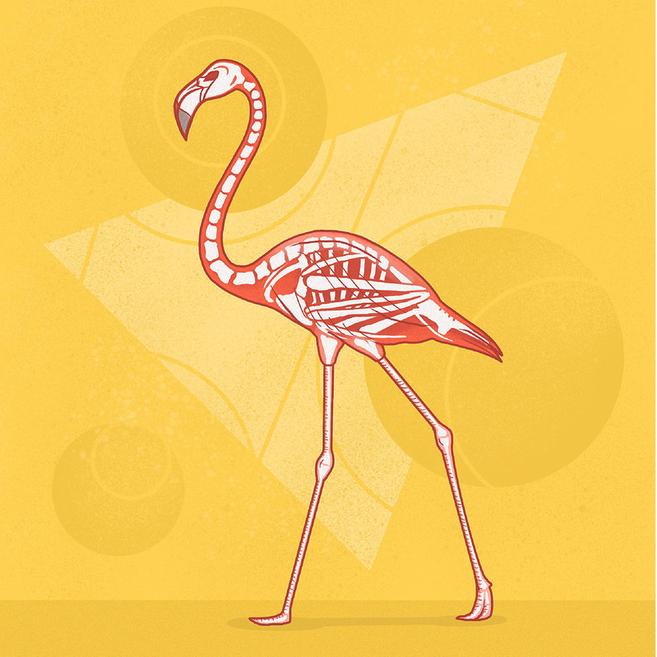 What's Inside   Flamingo