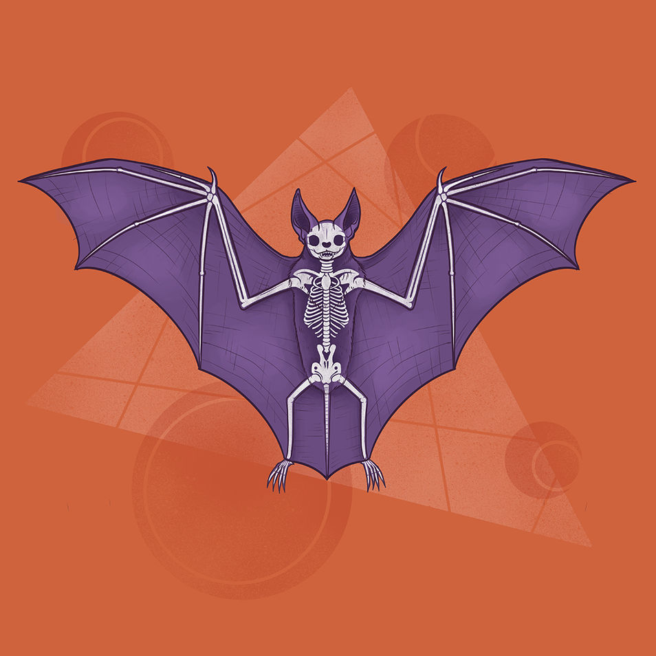 What's Inside   Bat
