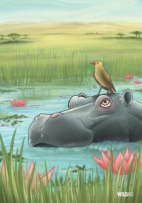 Wild Aid Poster: Hippo