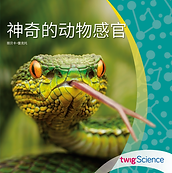 Chinese Reader Cover.png