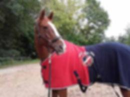 pupilaje caballos