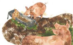 mavis pigs no text