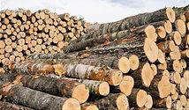 Pine logs.jpg