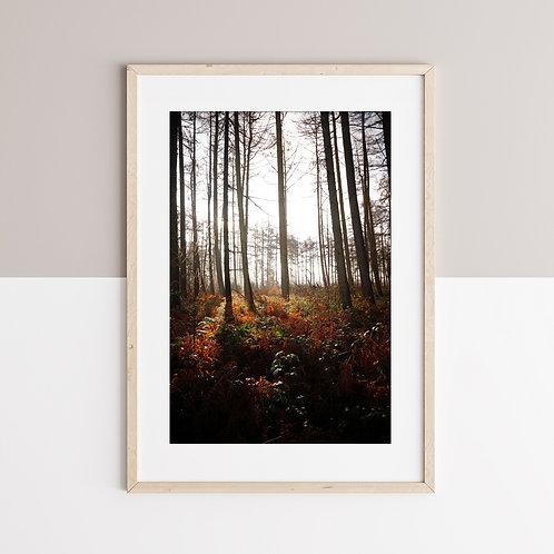 Forêt de la Capelle