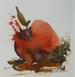 fallfrukt akvarell 16x16cm