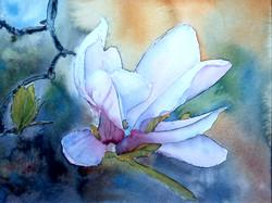 magnolia såld