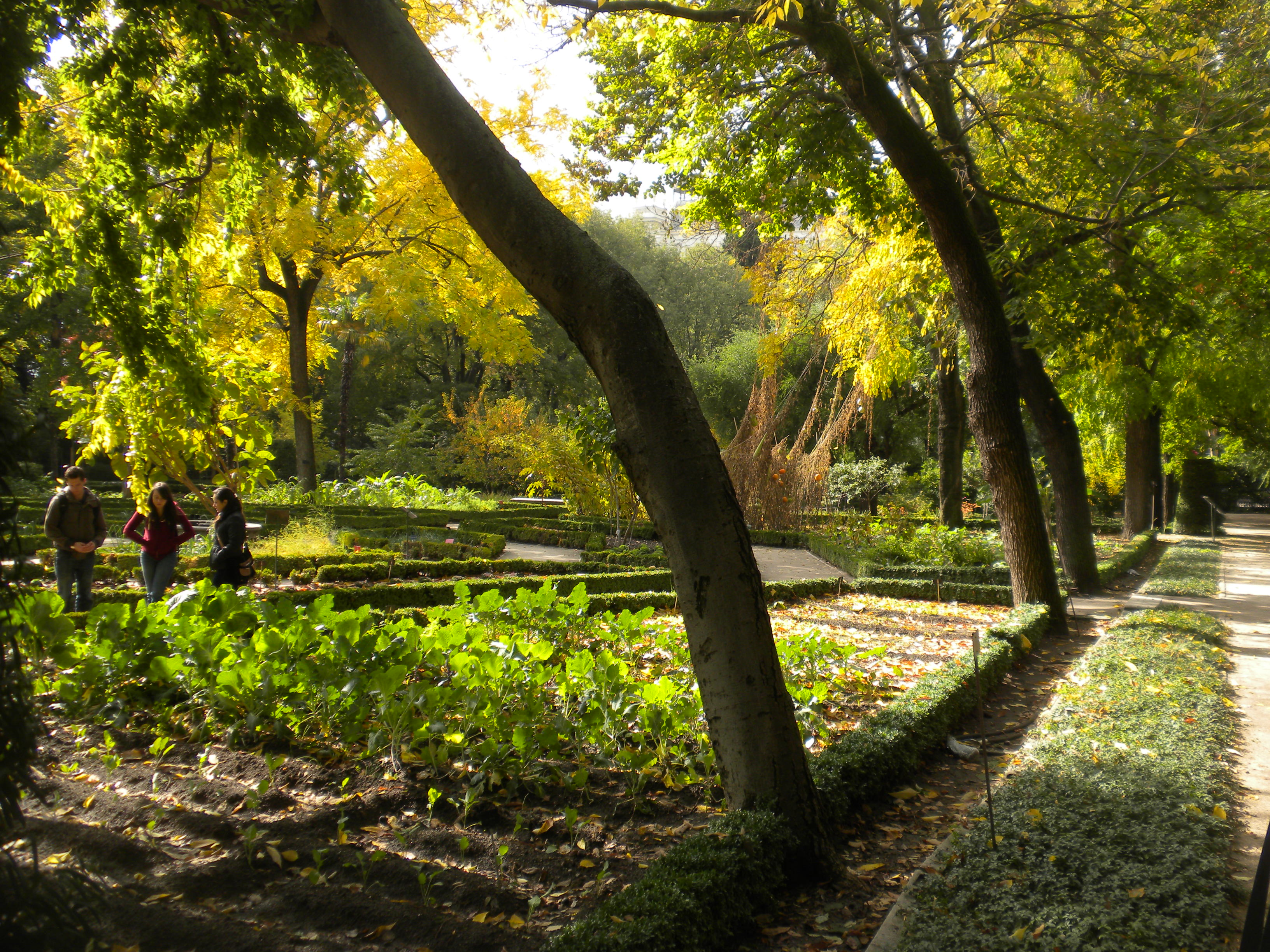 Botanical Gardens | Madrid, Spain