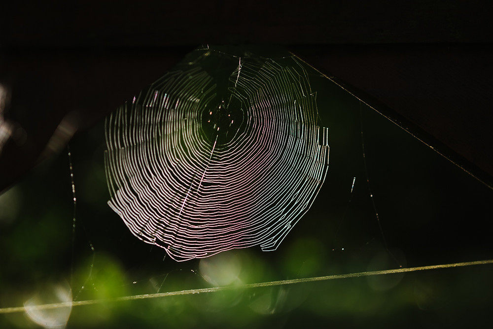 Spider web image by Bex Maini