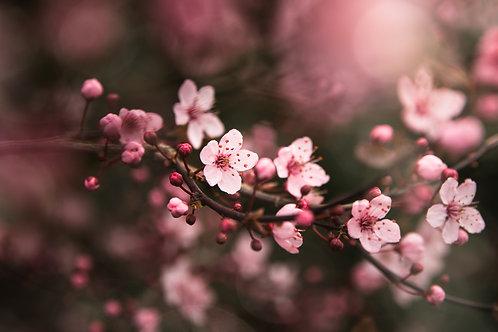 Spring Hope - Fine Art Print by Leah Barad