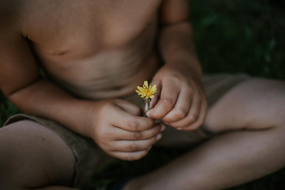 boy's hands clutching dandelion