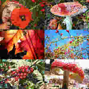 a collection of red coloured photographs of nature - flowers, toadstools and leaves