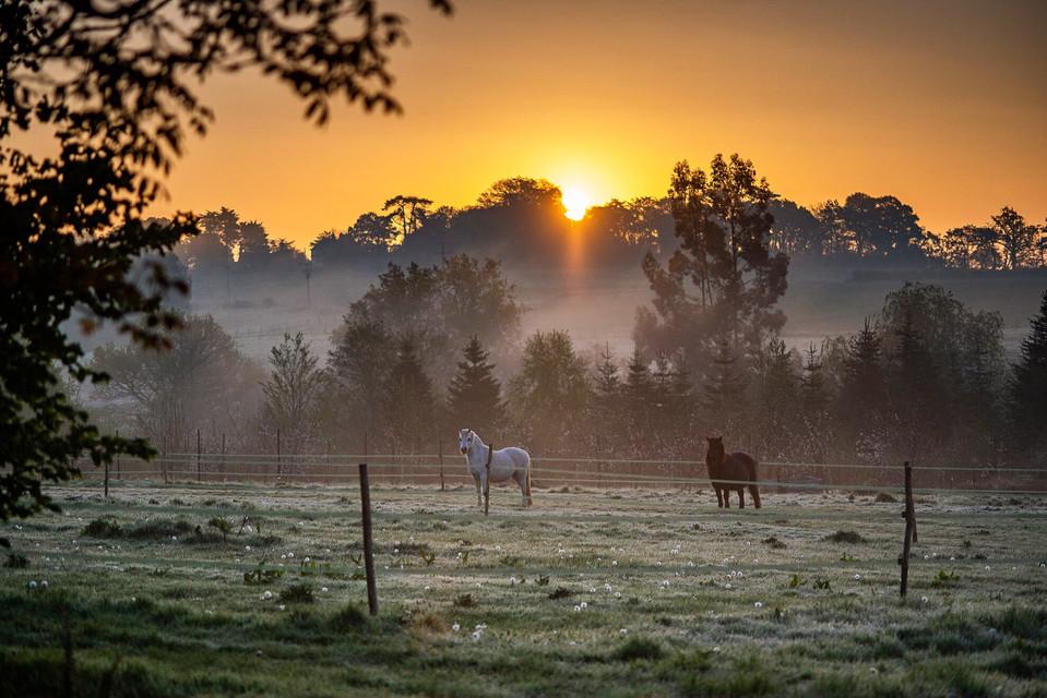 Bex-Maini_sunrise-in-Buxted.JPG