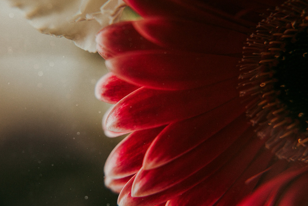 red flower close up