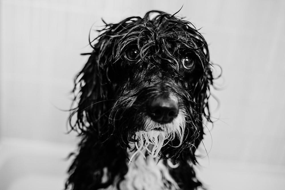 sad wet dog