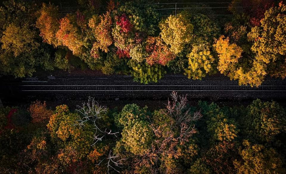 Autumn Trees along a road from above - drone shot