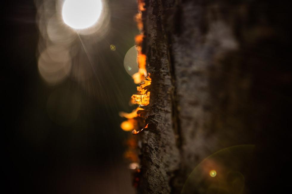 Low Light - Bark