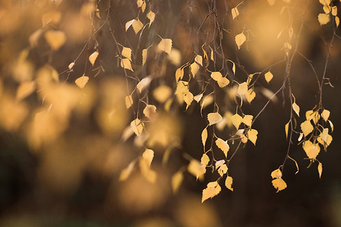 Autumn Breeze - Fine Art Print by Leah Barad