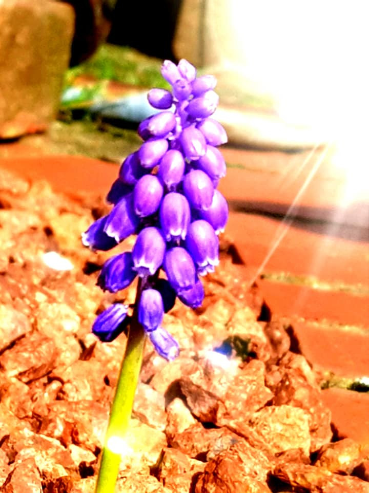 A purple flower with sun flare