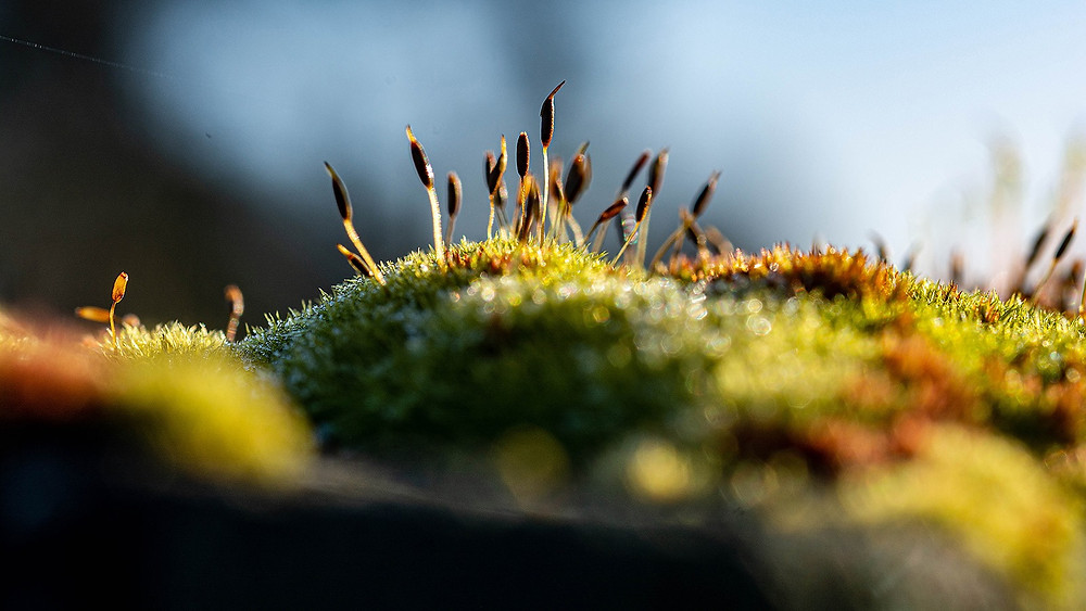 A photo of moss in sunlight